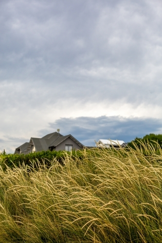 Looking through the dune grass to beach houses nestled on the waterfront