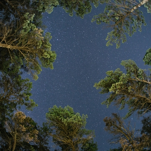Looking up at starry night sky with trees in foreground