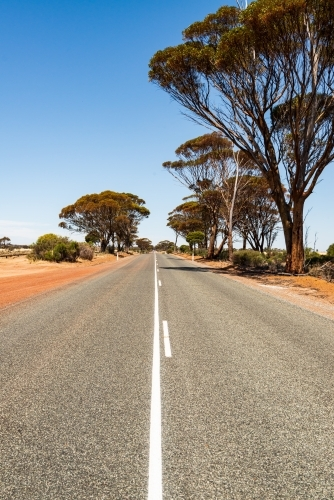 Low view of long straight bitumen country road with white lines, trees and clear blue sky