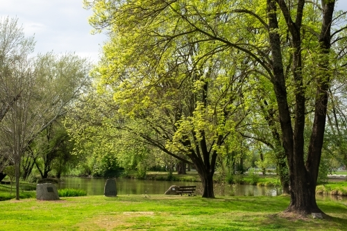 Lush green trees and grass  along the Tumut river