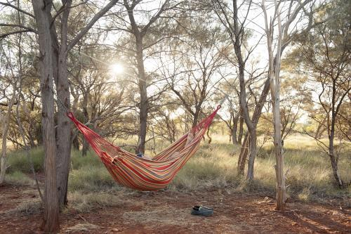 Man in hammock in australian bush at sunrise