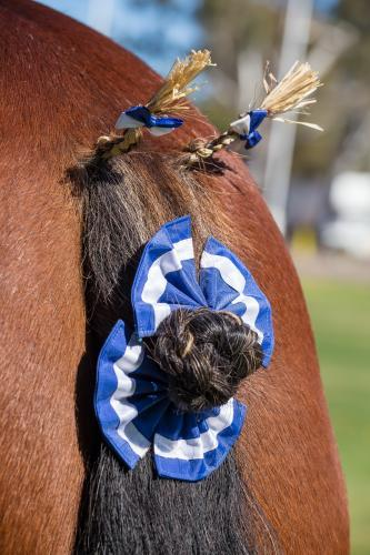 The decorated tail of a Clydesdale horse