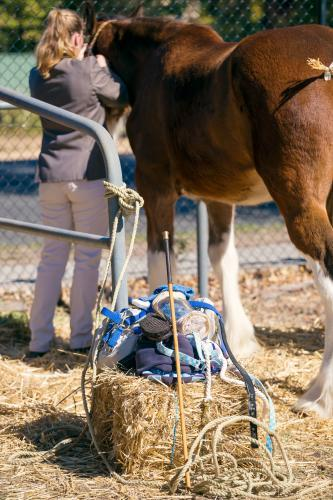 Horse riding equipment on a hay bale
