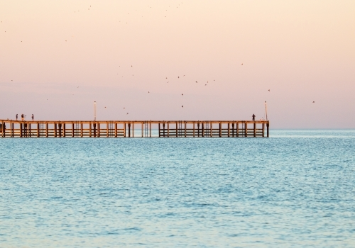 Fisherman on jetty in Wallaroo at dawn with birds flying off