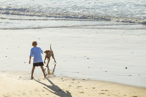 A boy and a dog playing on a beach