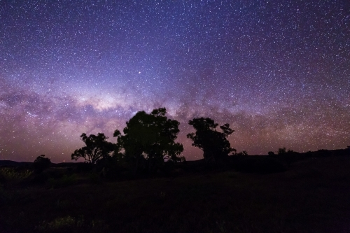 Gum trees silhouetted against starry night sky