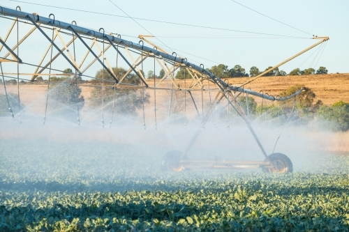 A large agricultural sprinkler watering vegetables in a paddock