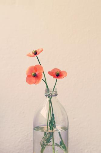 Three poppies in a glass bottle vase with clear space for text
