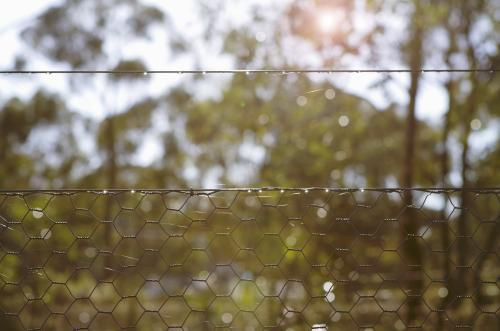 Looking through a wire fence at morning sun in the bush