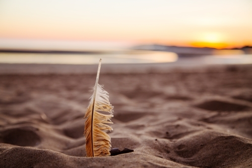 Feather on beach at sunrise