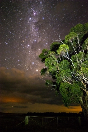 Gum tree in front of stars rising above clouds vertical
