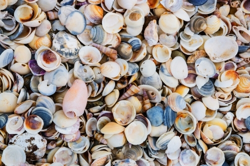 Close up of shells washed up on beach