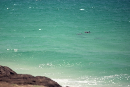 Dolphins swimming in green ocean