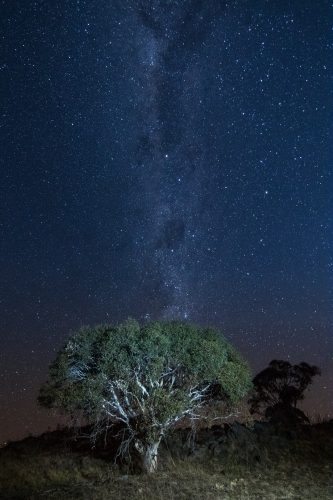 Milky Way behind a tree on a mountain