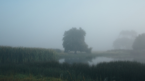 Misty morning beside a river with calm water, reeds and trees