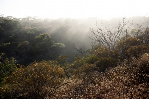 Morning mist through trees at Coalseam Conservation Park