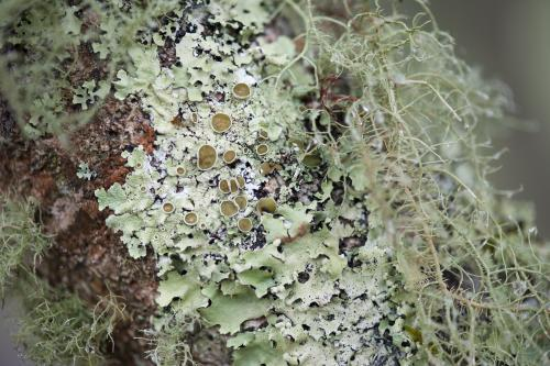 moss and lichen on tree trunk