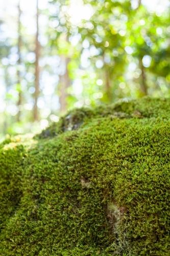 Moss covered boulder in forest