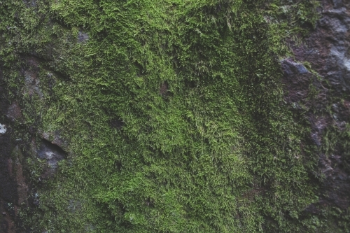 Moss covered rock face
