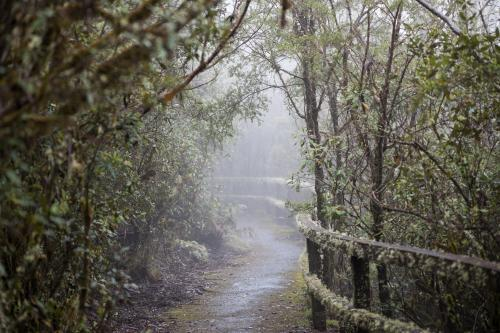 mossy path through misty rainforest