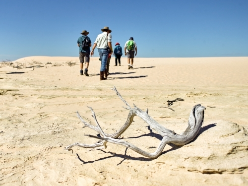Tourists walking up a sandhill with dry branch in foreground