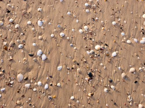 Shells, pebbles and water rivulets in brown beach sand