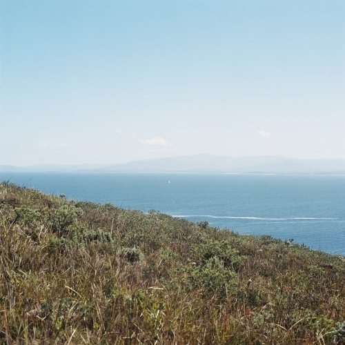 Ocean Landscape with Green Scrub Headland in Foreground