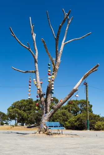 Old Tree With Buoys Hanging Off In Seaside Town