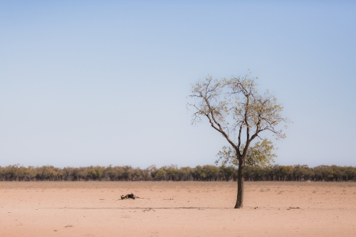 One tree in the foreground of a drought paddock