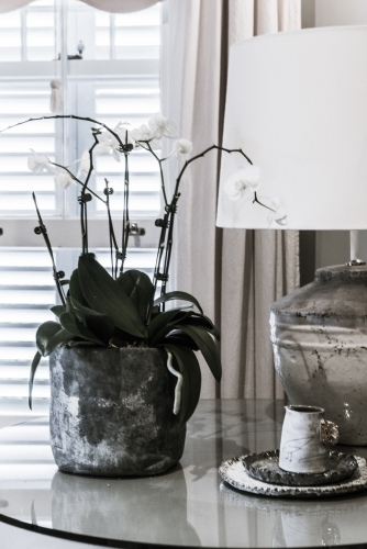 Orchid pot plant and lamp on table