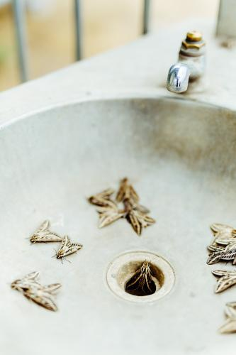 Outdoor sink filled with moths and insects