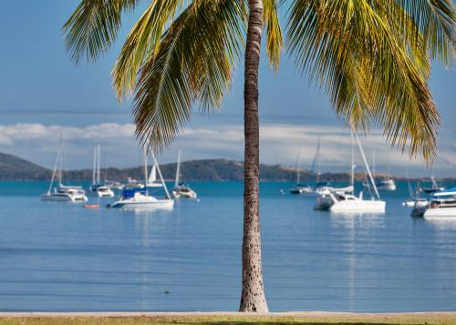 Palm tree on shoreline of Airlie Beach with boats on the water in distance