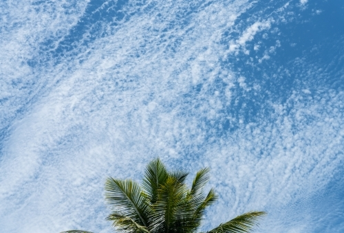 Palm tree with a beautiful blown out clouds in sky