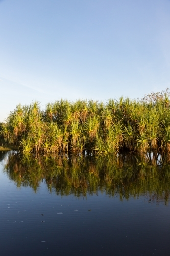 Pandanas and reflection in a waterway at Kakadu