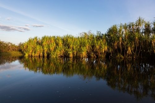 Pandanas and reflections at yellow waters, Kakadu