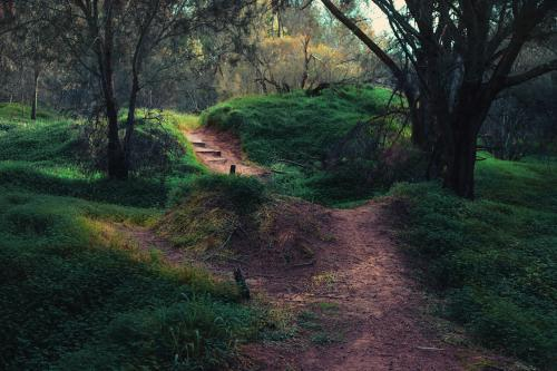 pathway in the forest by the lake in toodyay