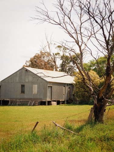 Iconic country shearing shed set amongst the trees