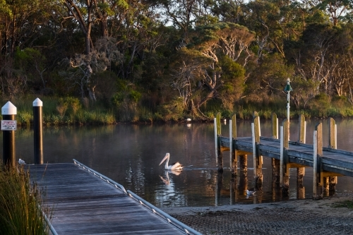 Pelican near a jetty at dawn