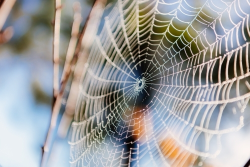 Perfect spider web on blurred nature background.