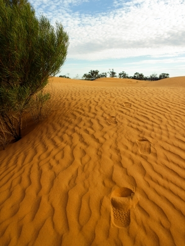footprints leading up a sandhill in the outback