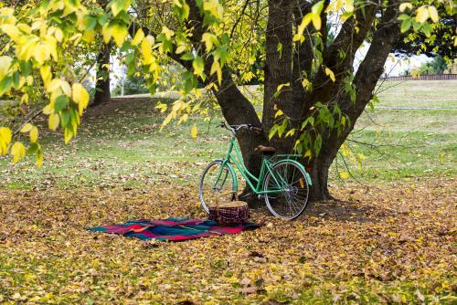 picnic blanket and green bike under tree with yellow autumn leaves