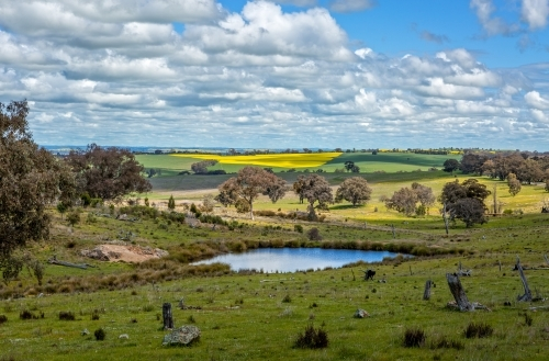Picturesque rural farmlands in Central West NSW for as far as the eye can see.