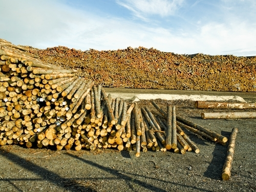 Piles of logs in a yard