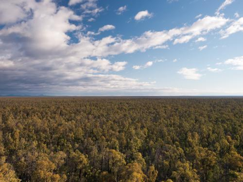 View of unbroken trees of Pilliga Forest to the far horizon