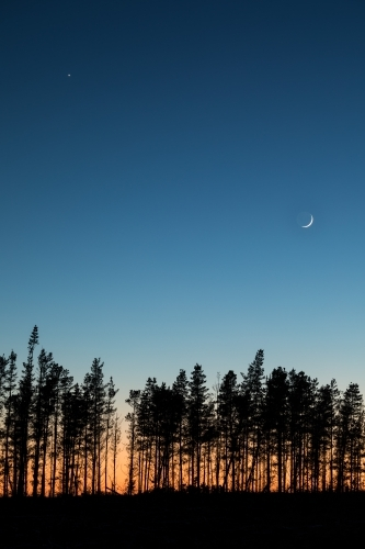 Pine trees against colourful dawn sky with crescent moon