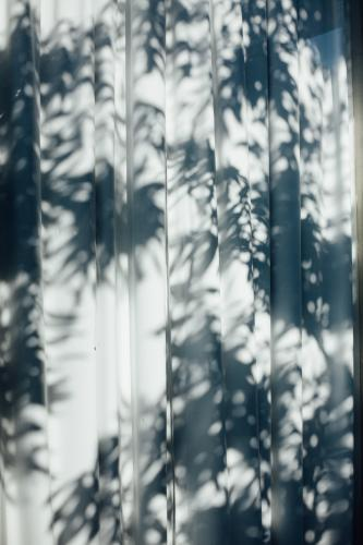 Plants casting shadows on curtain