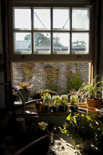 Plants sitting on windowsill in greenhouse with sun streaming in.