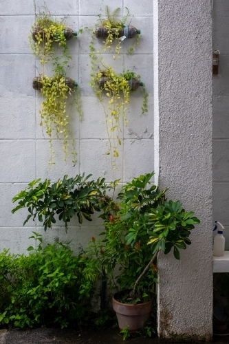 potted and hanging plants adorn a whitewashed wall