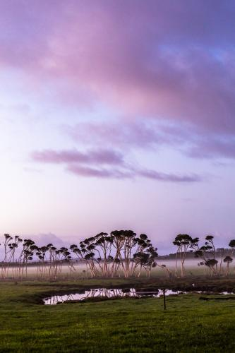Purple sunrise and mist over a paddock on Tasmania's North West Coast