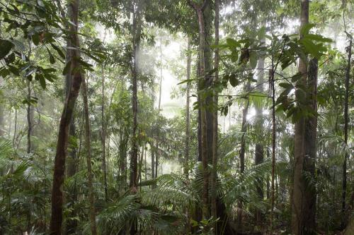 Queensland rainforest in cloud